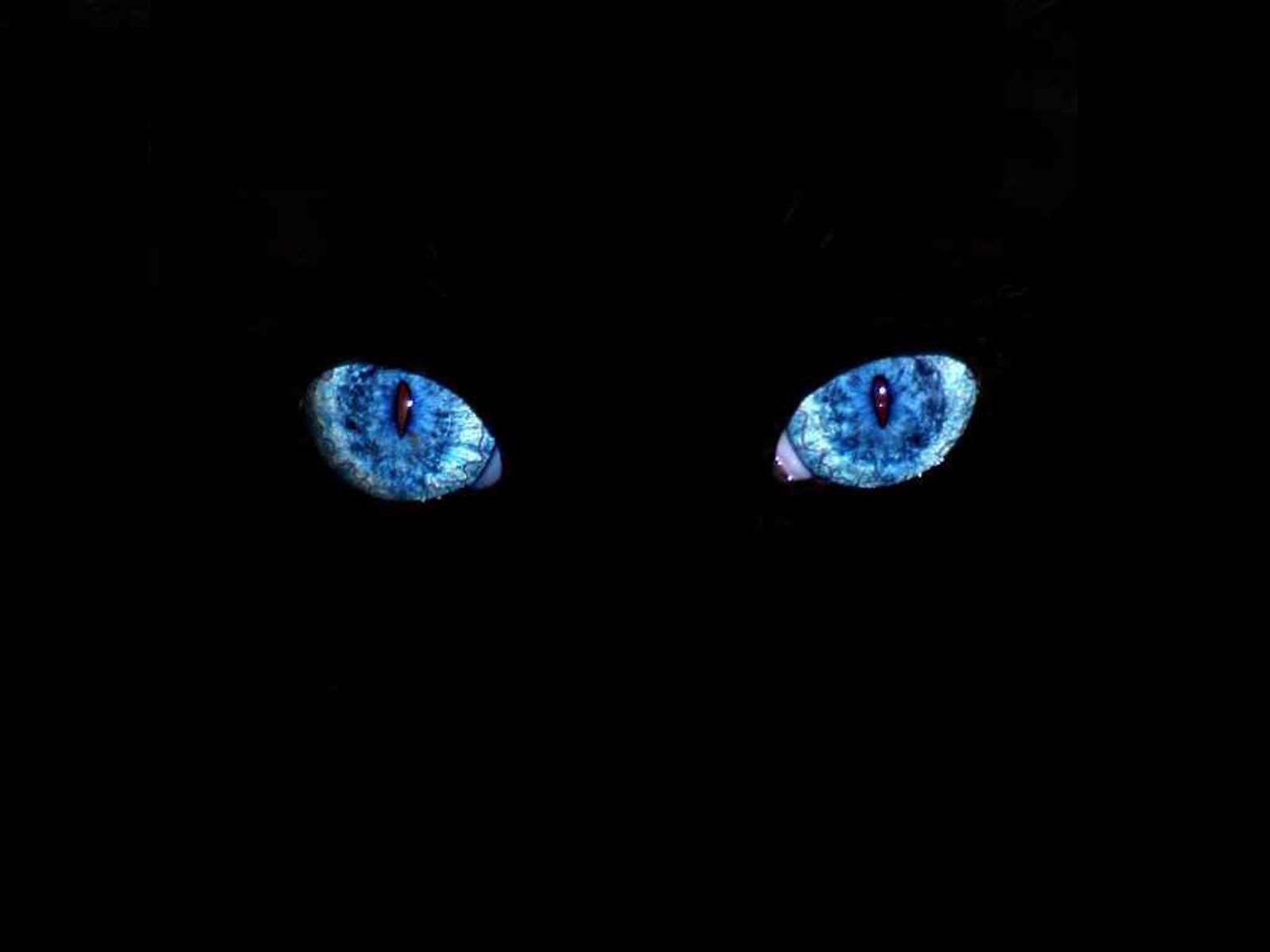 wallpapers black cat blue eyes