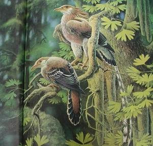 aves del cretaceo Otogornis