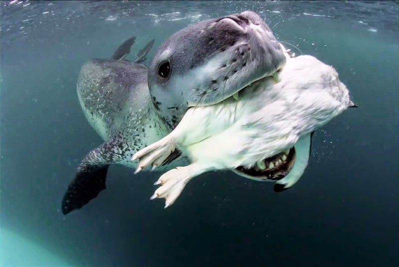 A Photographer Came Face-To-Face With A Vicious Predator. I Still Can't Believe What Happened Next