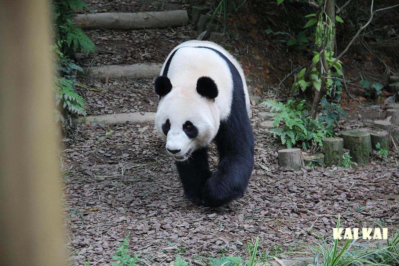 wwf panda forest - photo #15
