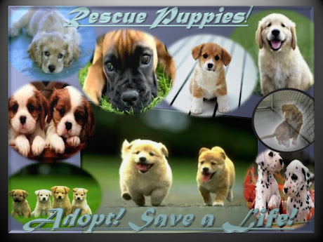 THE TRUTH BEHIND THE LIES OF RUSSO'S AND I HEART PUPPIES ~ PUPPY MILLS SUPPLYING PET STORES