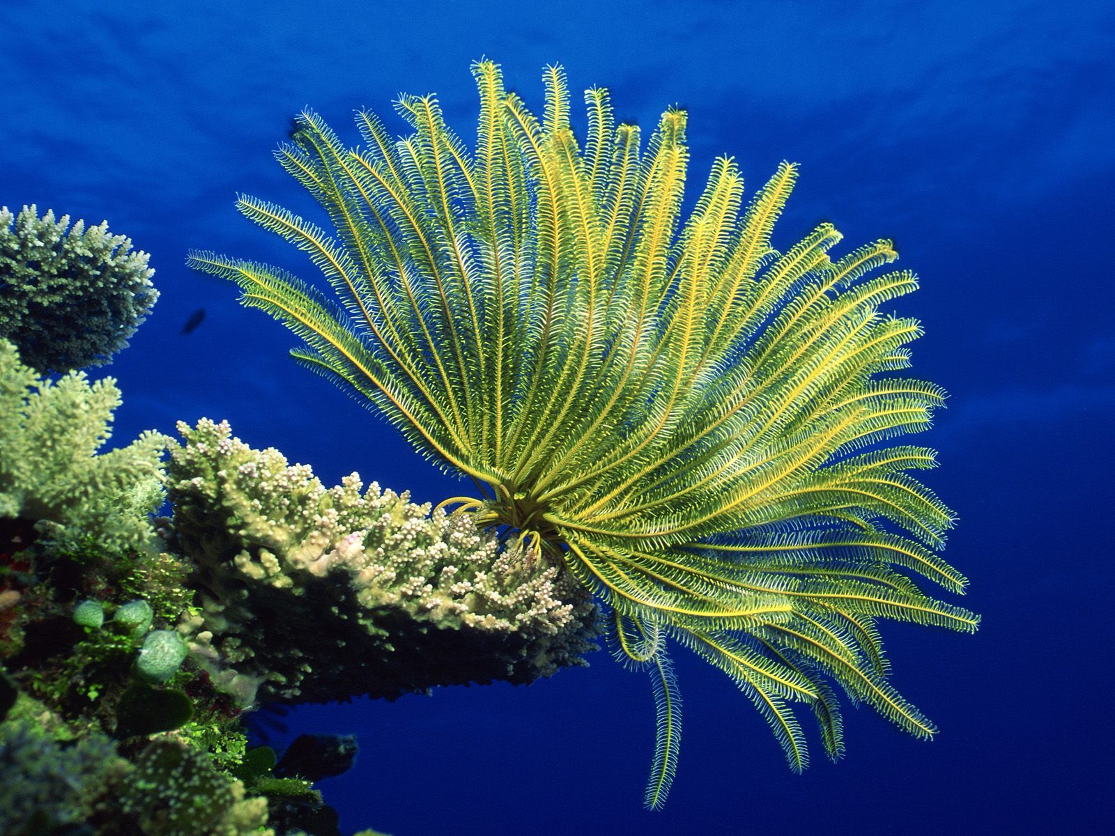 Warming Seas and Corals: A New Conundrum THE COSMOS NEWS