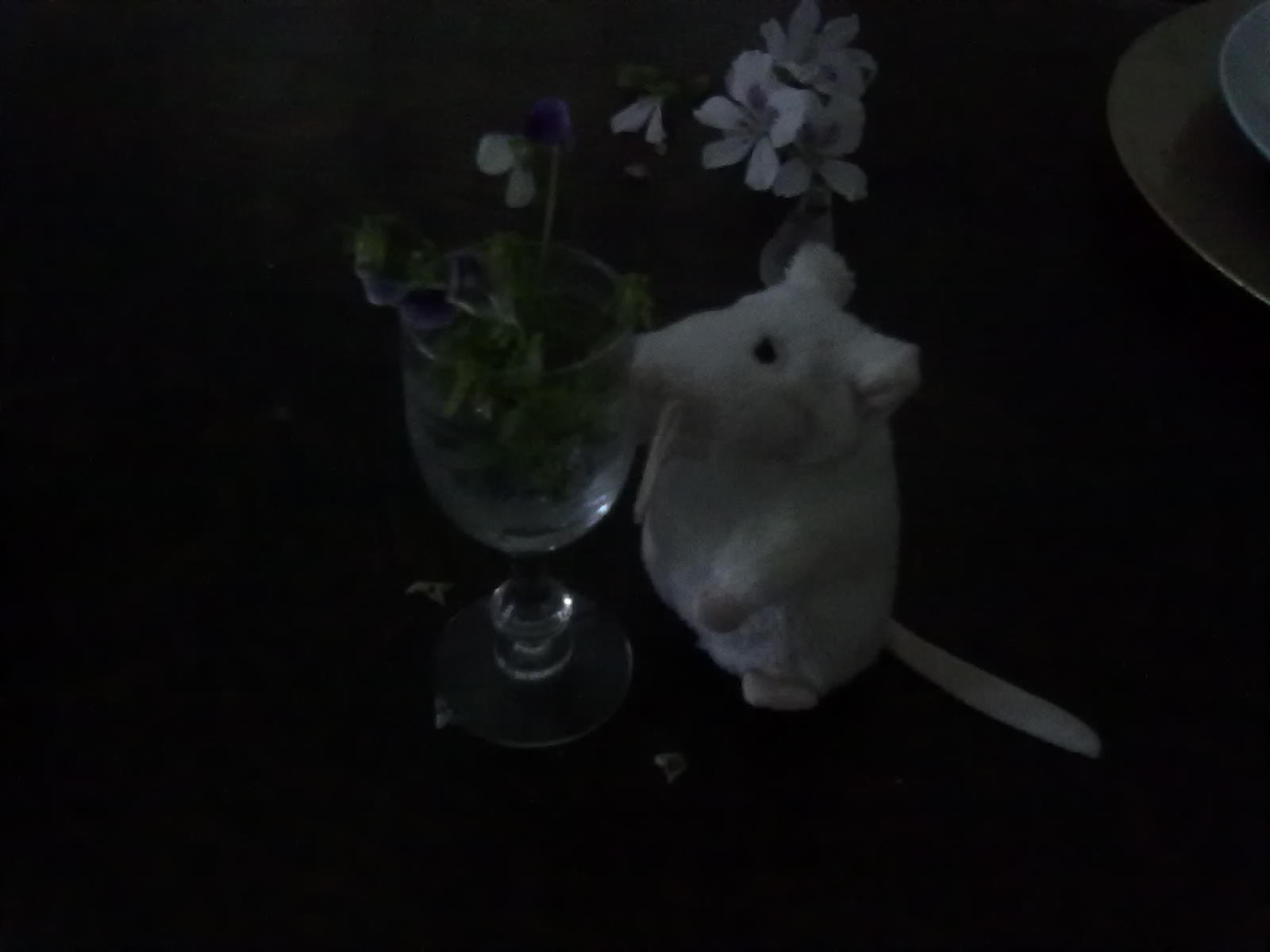 http://4.bp.blogspot.com/-QVETWZBBIc0/TohOaxSGMzI/AAAAAAAAQl4/VcNTrgJ9em8/s1600/ratinho%2Be%2Bcopo%2Bflores.jpg