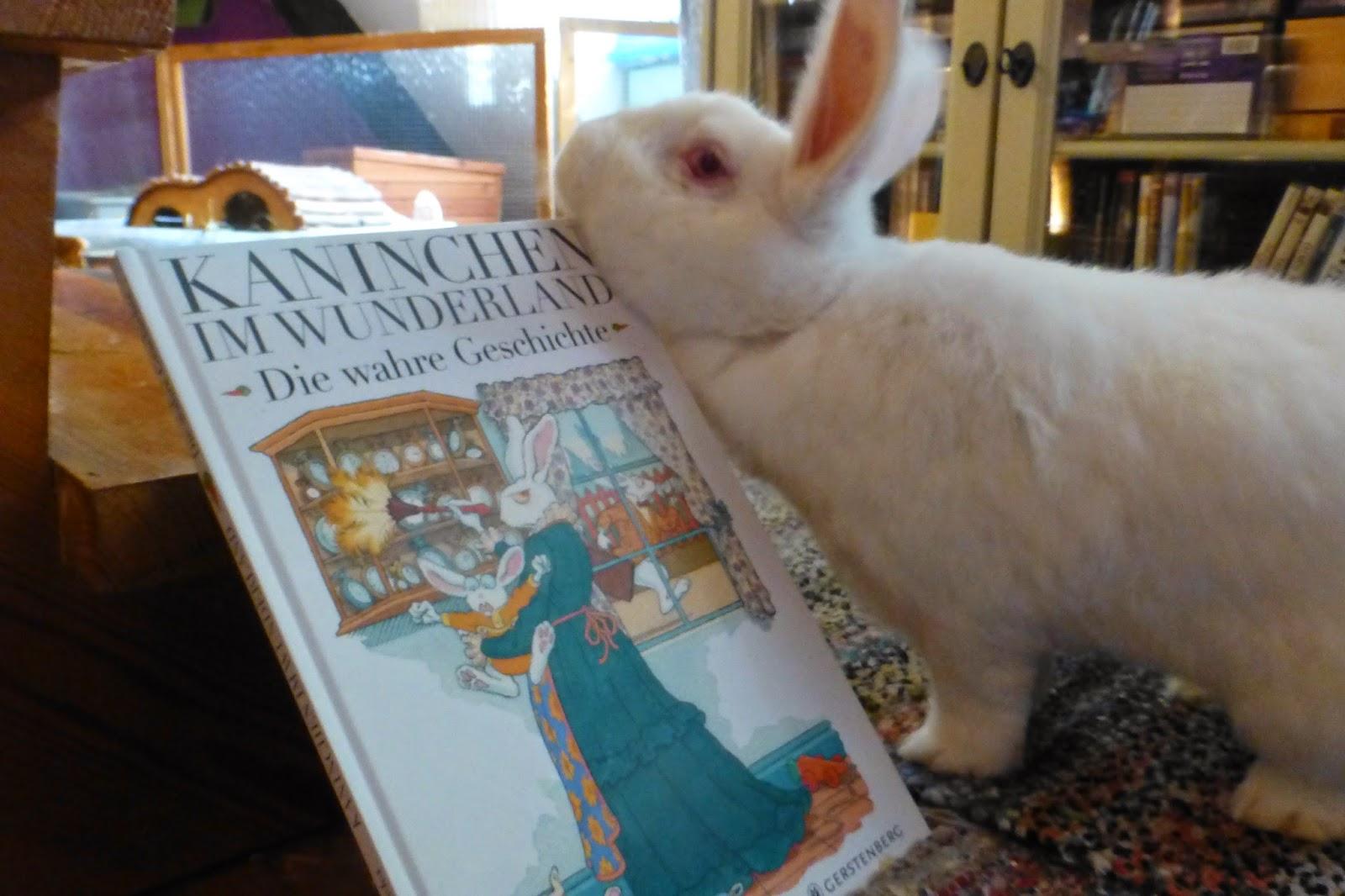 Casanova und Buch