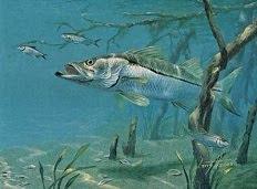 Saiba Tudo Sobre Pesca e Muitas Dicas