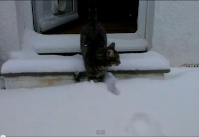 video Kucing bermain salju sudah ditonton lebih dari 1,5 juta orang