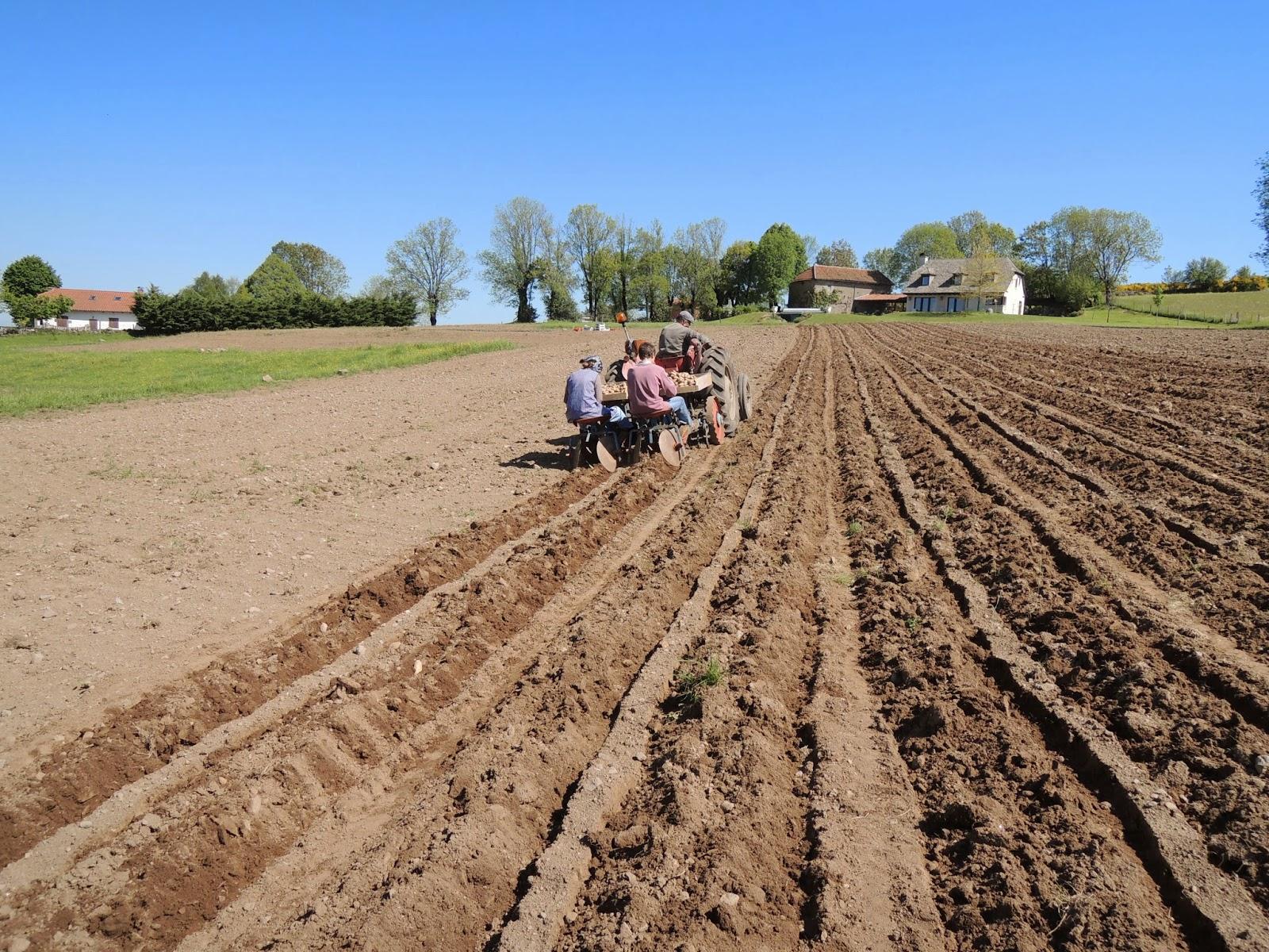 Culture de pommes de terre au gaec de puy basset - Labourer la terre ...