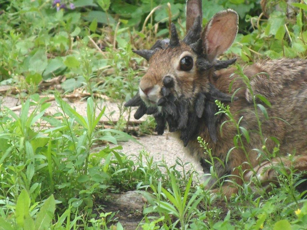 Rabbit matchmaking