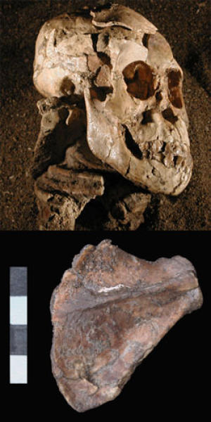 Fossils suggest Australopithecus Afarensis was a tree climber