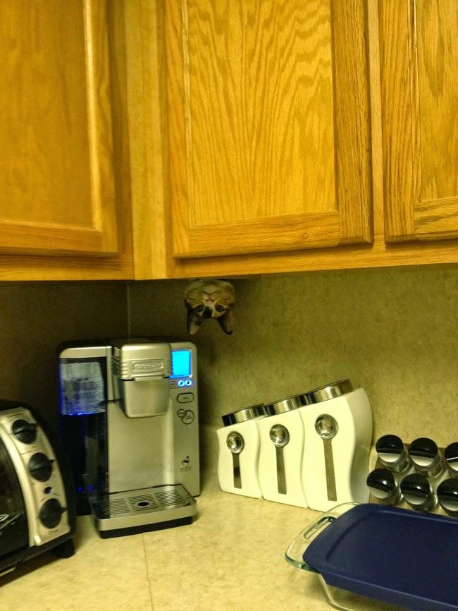 ninja cats playing hide and seek-1