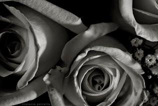 Portal of Roses