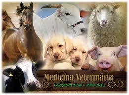 Ser médico veterinário é ser vários  médicos em um!