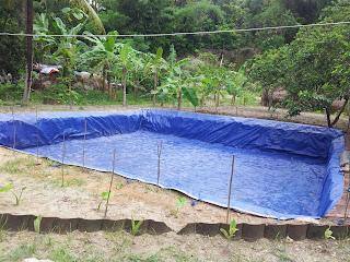 Kolam Terpal Untuk Budidaya Ikan Nila Merah