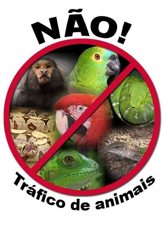 Não ao tráfico de animais