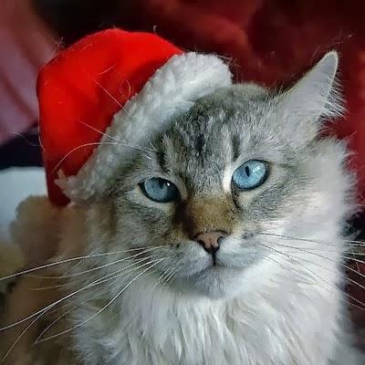 circa survive christmas 2011 - Mookies Last Christmas