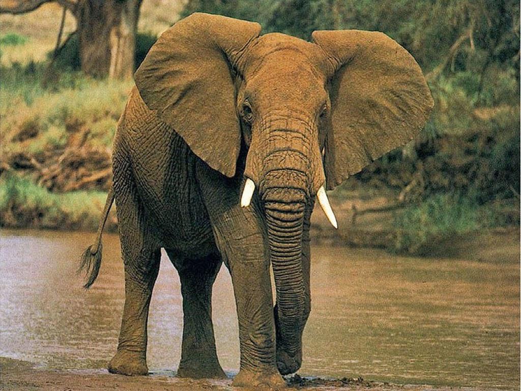 Algunas curiosidades sobre Animales