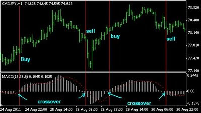 Z 5 advanced forex scalping system ea
