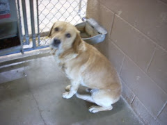 4/17/12 Gassing Shelter. Dogs and Cats  Always in Need OH