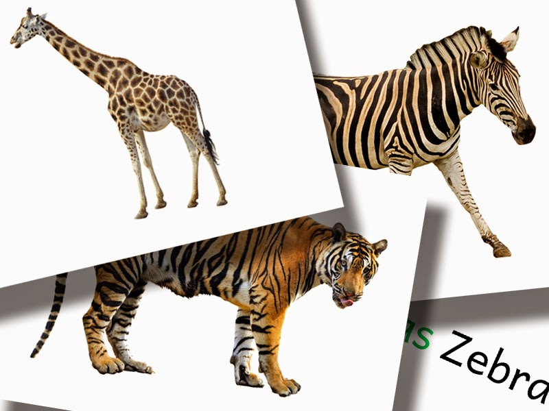 DaZ Material Tiere Bildkarten zur Sprachförderung kostenlos downloaden