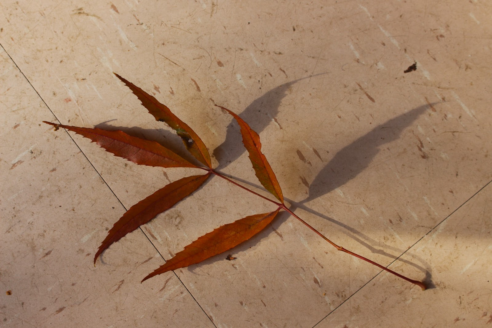 Photo of a stray ash leaf on a kitchen floor