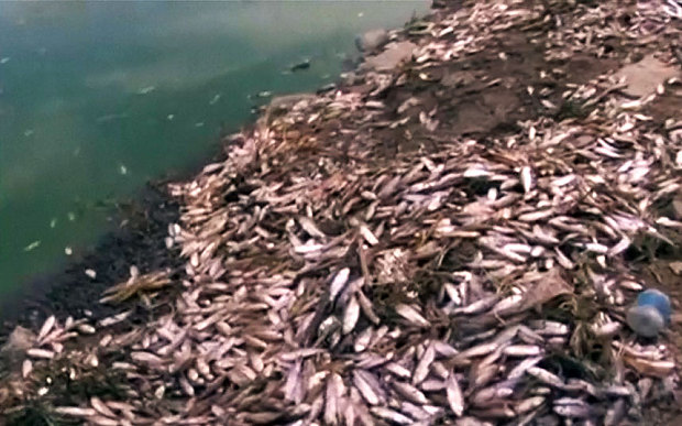 Mystery over a tons of dead fish washing up on shores of Bolivian lake: Equipment to help oxygenate