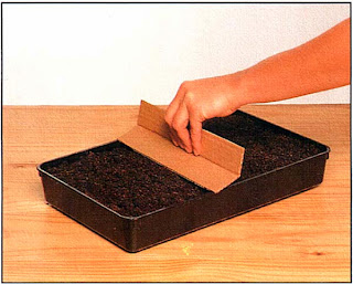 Выровняйте землю при помощи дощечки или куска твердого картона, затем мягко утрамбуйте ее