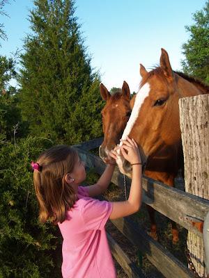 horse pet life
