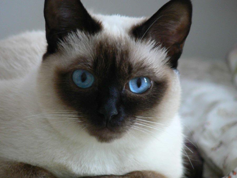 Mtos y leyendas sobre el gato