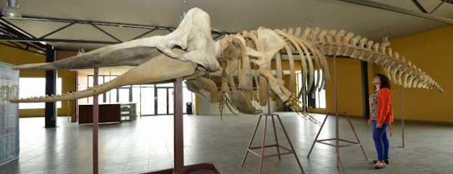 Resultado de imagen para museo de las ballenas