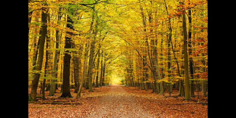 autumn graphics picture autumn forest wall mural