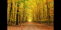 Autumn graphics picture autumn forest wall mural for Autumn forest 216 wall mural