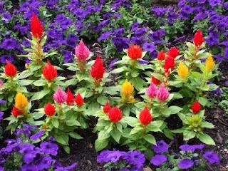 los colores de las flores exoticas