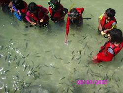 Fish Feeding