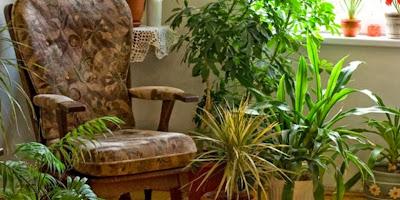 Daftar Tanaman Hias Paling Bagus untuk di Rumah