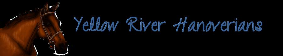 Yellow River Hanoverians