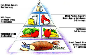 <b>The Food Pyramid</b>