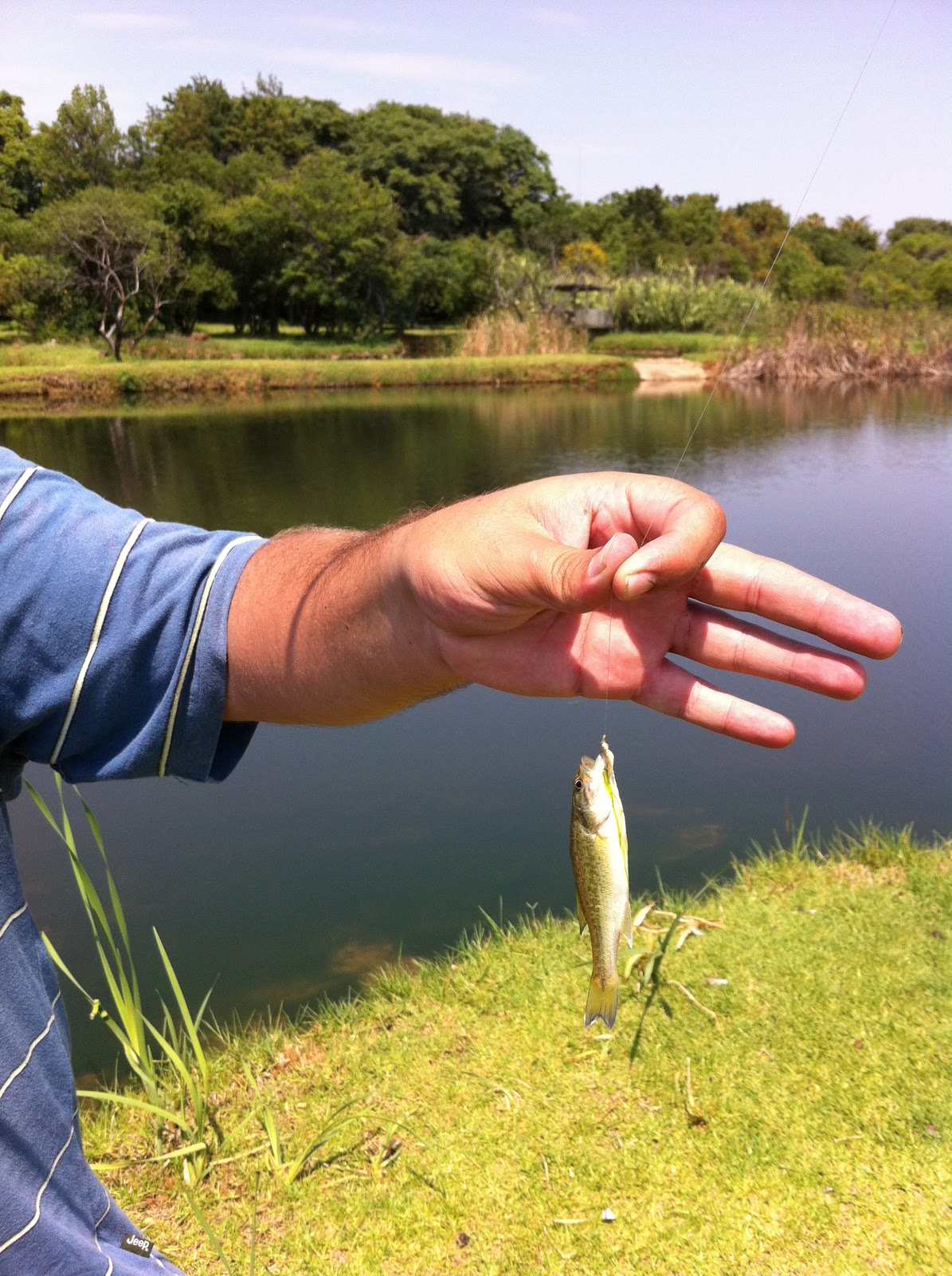 Fly fishing for bass fly fishing addict for Bass fly fishing