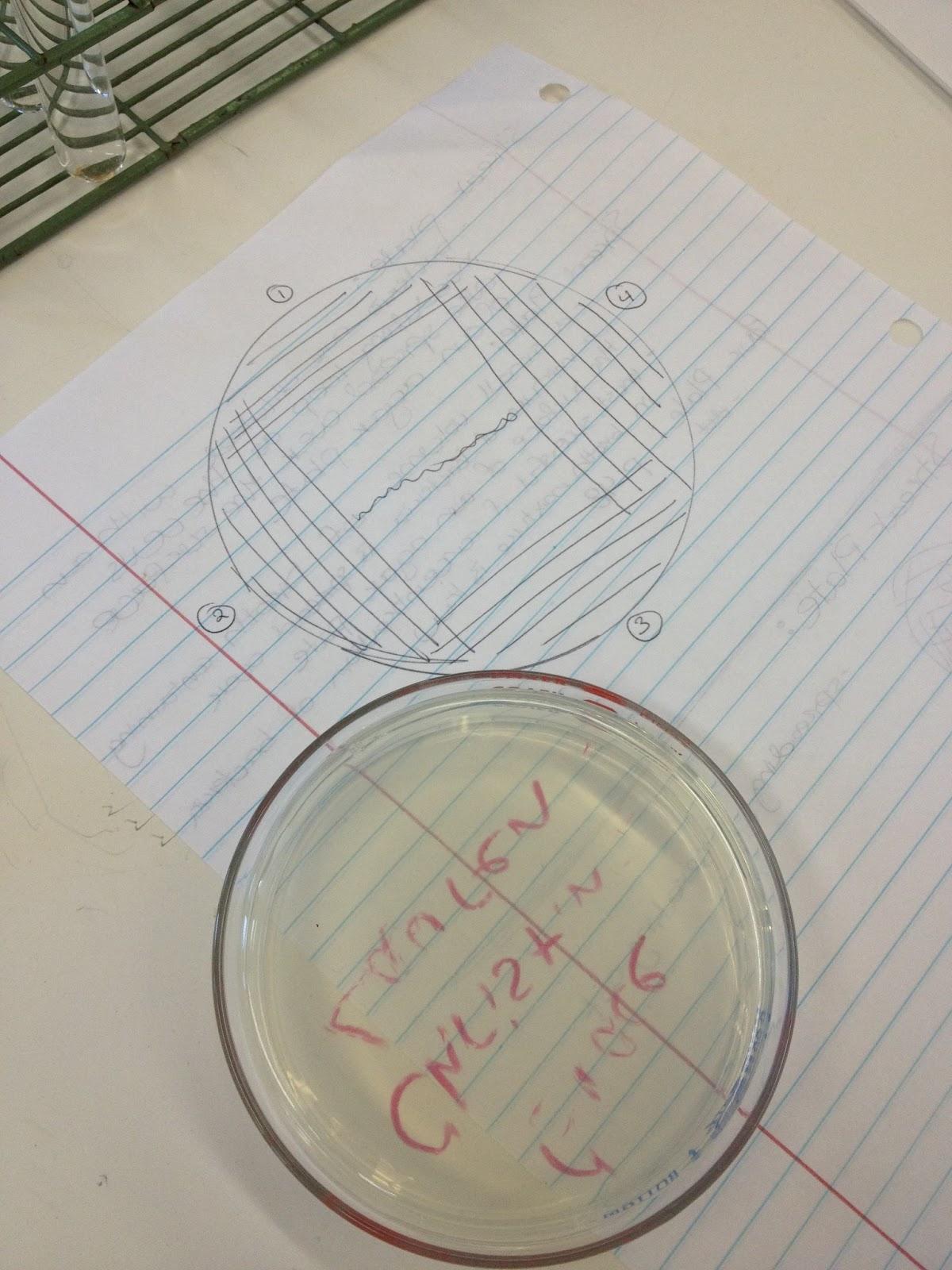 how to prepare agar slant