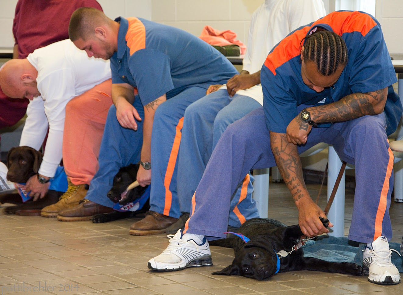 Three men sit on stools and are leaning forward and looking at the two black lab puppies and one chocolate lab puppy  lying on the floor between their legs. The man on the left is wearing a long sleeve white shirt and peach sweat pants, his hands are massaging the black lab's shoulders. The puppy is looking at the camera. The man in the middle is wearing the blue prison uniform and is reaching down to the black lab puppy at his feet with his left hand, which is holding an antler. His right arm is resting on his right knee. The african american man on the right is wearing the blue prison uniform and is bent over with his left forearm on his left knee. He is reaching down with his right hand and holding the left front paw of a small black lab at his feet. The labe is lying on her right side facing the camear.