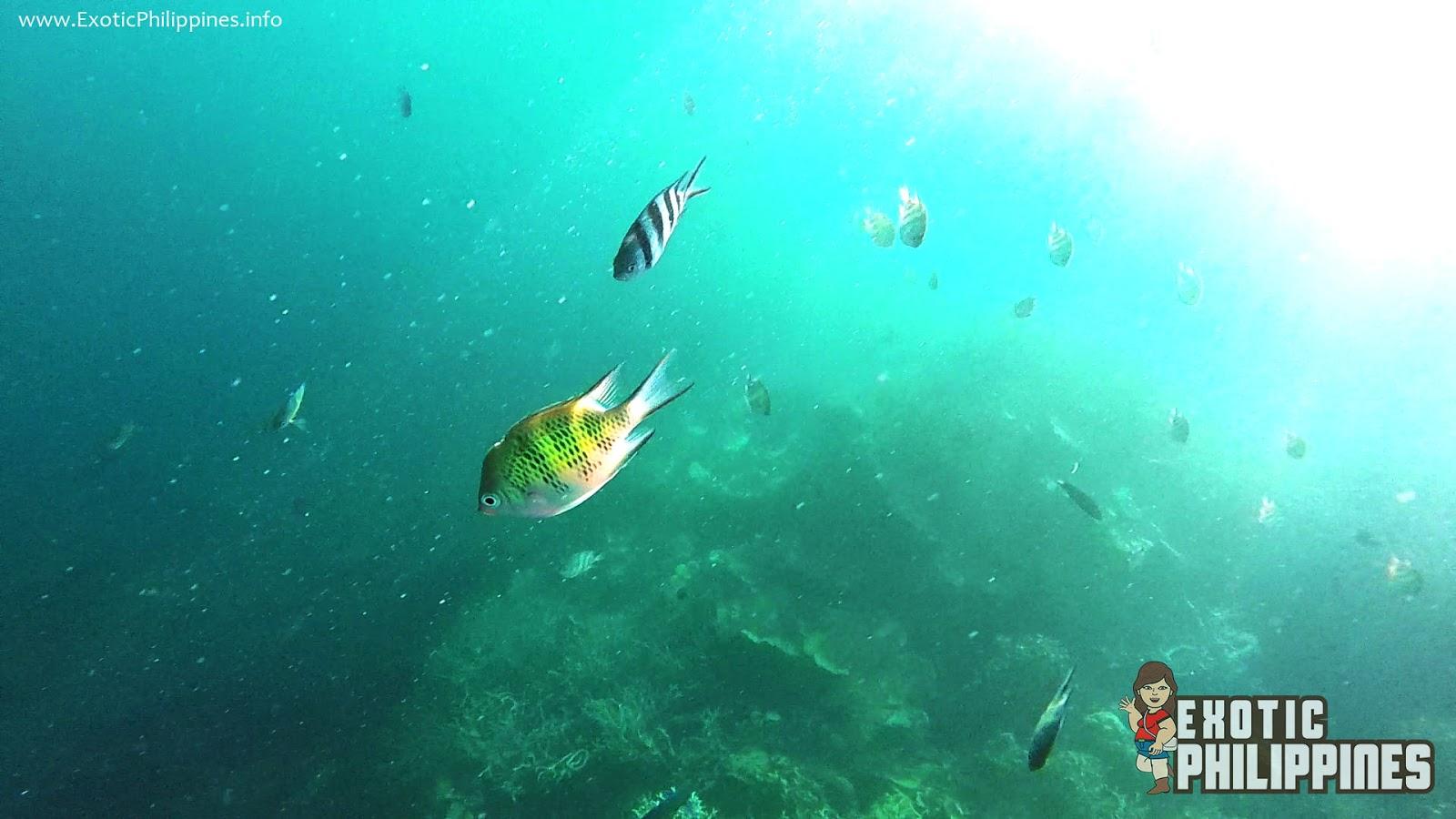 Snorkeling at the Siete Pecados of Coron Palawan Exotic Philippines Travel Blog Gay Aida Dumaguing