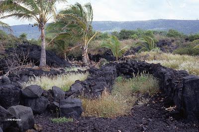 Wahaula Hiaeu 1982