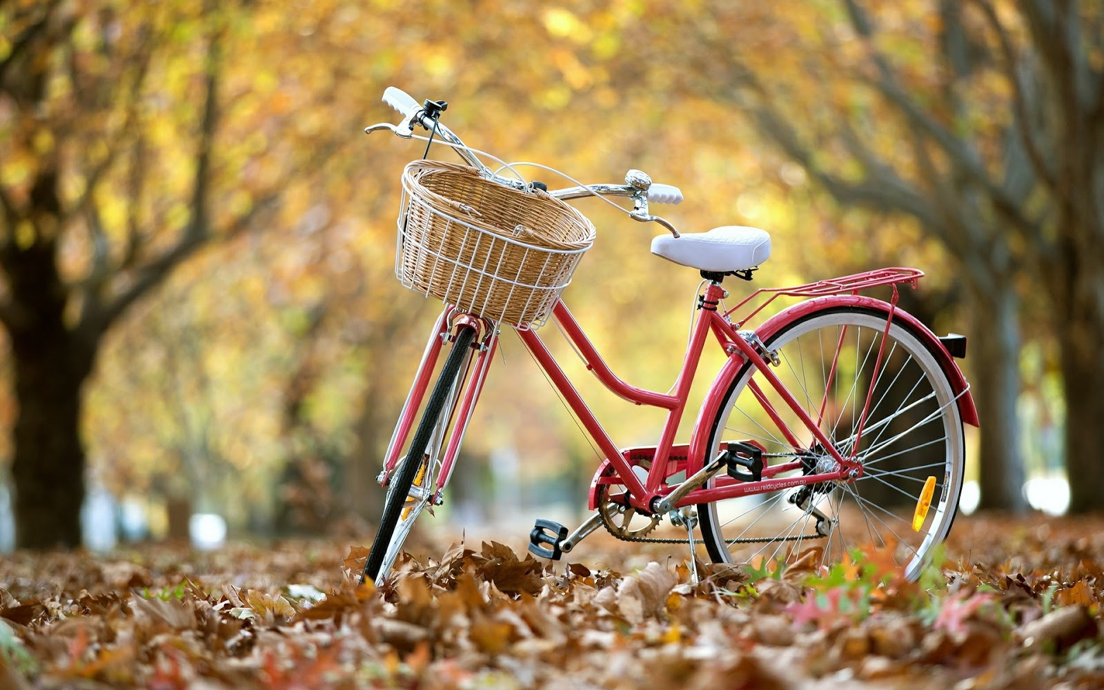 bicycles with flowers wallpaper - photo #27