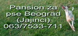 Pansion za pse Beograd - Jajinci. Tel: 063/7533-711