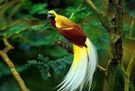 burung ku yg terindah bagik u