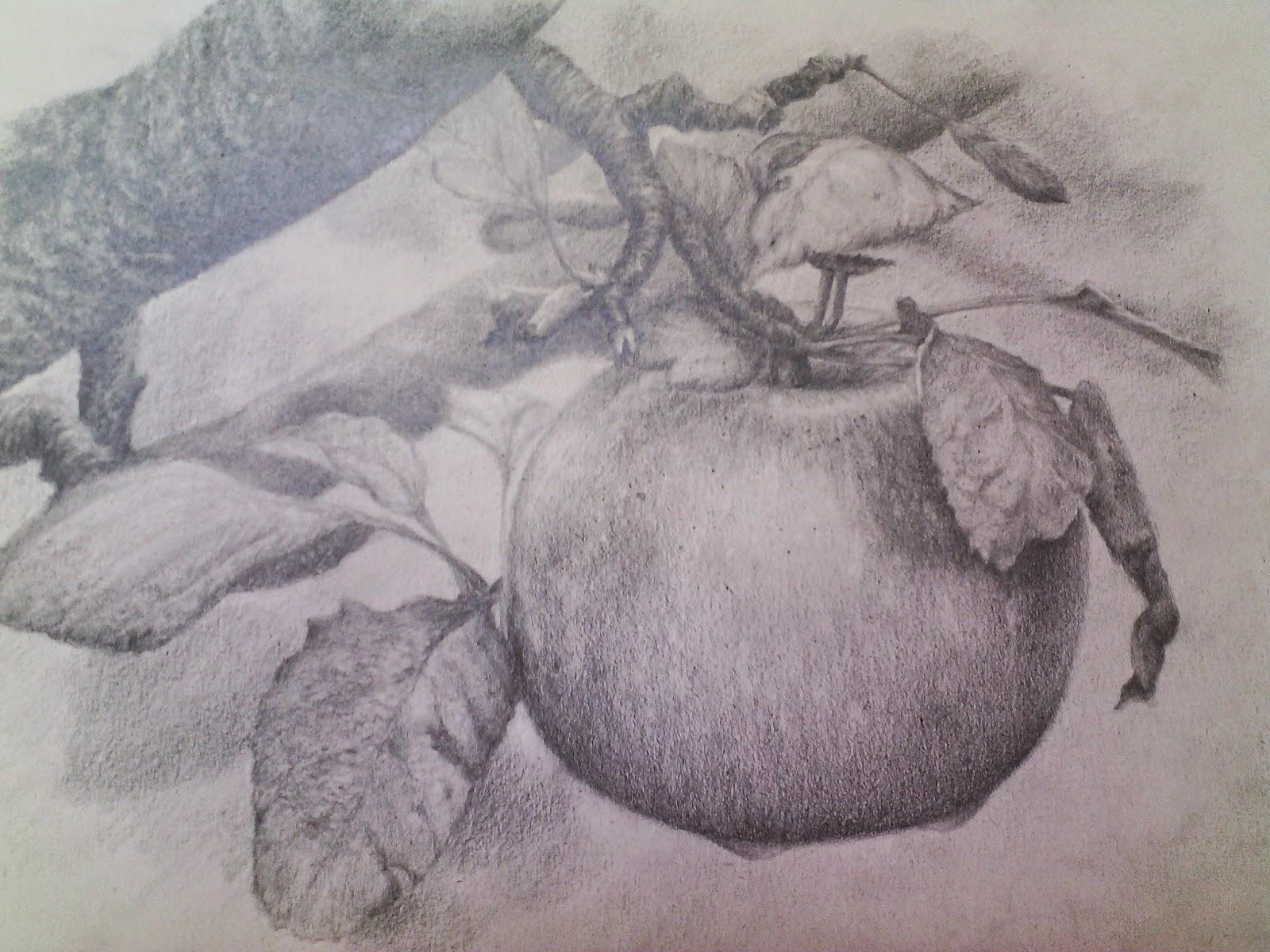 GIGI Feng Shui Dibujos a lpiz y carboncillo