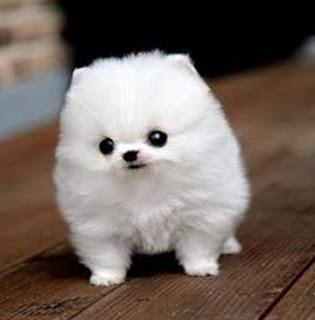 Cute dog