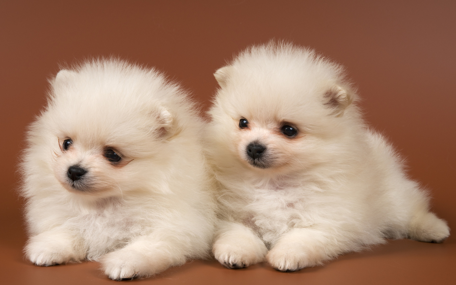 PZ C: perros tiernos
