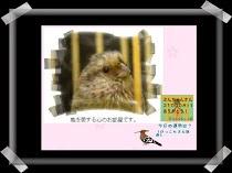 (新)ぶんちゃんの画像掲示板