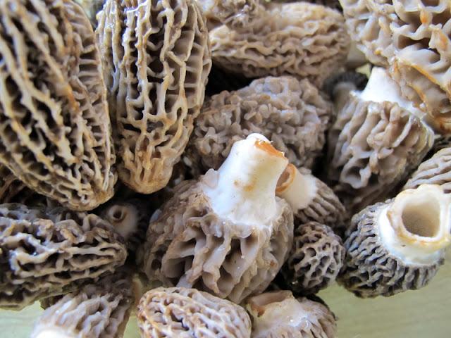 indiana truffles