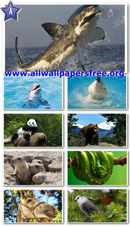30 Amazing Animals Wallpapers 1680 X 1050